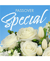 Passover Special Designer's Choice