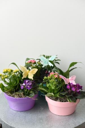 Pastel Dish Garden  in La Grande, OR | FITZGERALD FLOWERS