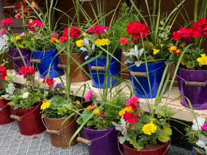 Patio Blooming Buckets Plant in Jefferson, IA | Fudge's Flowers and Gifts