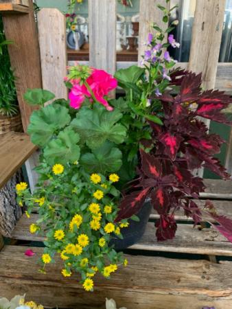Patio Planter Annuals