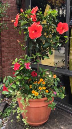 Patio Planter Planter