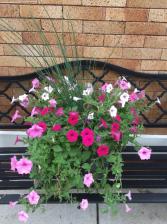 """Patio Pot (12"""") plant"""