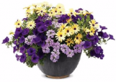 Patio Pot #2 Sun or Shade Pots, request your own...