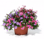 Patio Pot #5 Sun or Shade Pots, request your own...