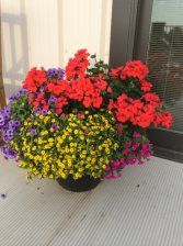 Patio Pots - mixed annuals Full Sun