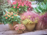 Patio Pots  Outdoor