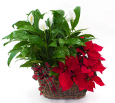 Peace and Poinsettia double basket Christmas Arrangement