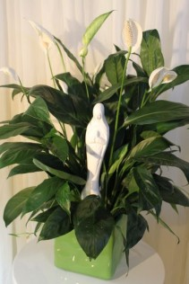 PEACE BE WITH YOU Plant with Madonna Statue