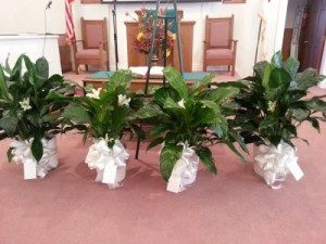 Peace Lilies  in North, SC | ELEGANT CREATIONS FLOWERS EVENTS & MORE