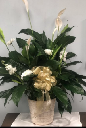 Peace Lily Funeral