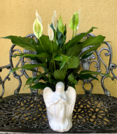 Peace lily in Angel planter