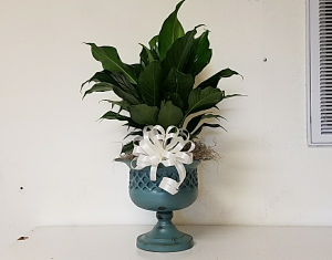 Peace lily in pedestal urn plant in Bryson City, NC | Village Florist & Christian Book Store