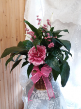 Peace lily in pink