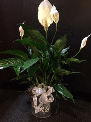 Peace Lily in Snowflake Tin  in Fowlerville, MI | ALETA'S FLOWER SHOP