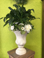 Peace Lily in Urn