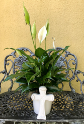 Peace lily plant in Cross Planter