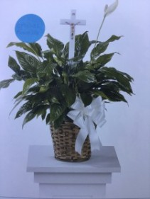 Peace lily plant Plant in basket with ribbon and a cross