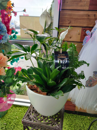 Peace Lily Planter  SOLD OUT