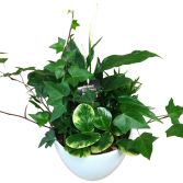 Peace lily planter - 409 green plant
