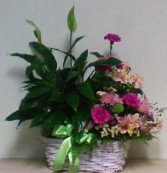 Peace lily with fresh flower arrangement Plant and flowers