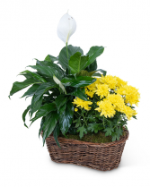 Peace Lily with Yellow Mum Plant Plant