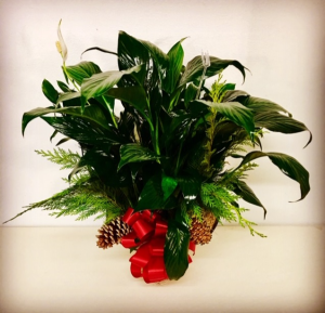 Peace on Earth Peace Lily with Christmas Design in Plainview, TX | Kan Del's Floral, Candles & Gifts