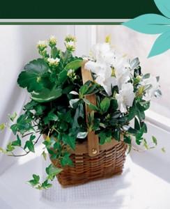 Peace & Serenity Dishgarden Plant