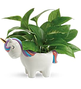 Peaceful Unicorn Planter Teleflora in Springfield, IL | FLOWERS BY MARY LOU