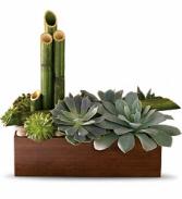Peaceful Zen Garden - 101 Plant