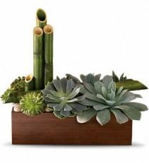 Peaceful Zen Garden Plant