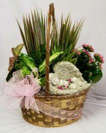 Peacefull Garden Live Plant Basket