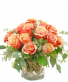 Country Sweetheart - Garden Roses  Compact