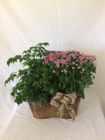 Peanut Basket Planter