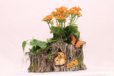 Peek a hoot plant