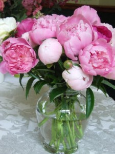 Peonies, Beautiful & Fragrant!  5, 10, or 15 Stems in Gainesville, FL | PRANGE'S FLORIST
