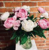 Peonies In Bloom Vase of Peonies