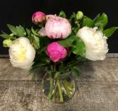 PeoniesThis Week Summer Special Vased Fresh Arrangement