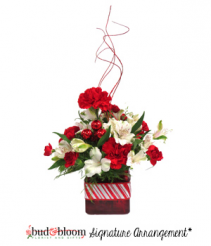Peppermint Twist Bud & Bloom Signature Arrangement