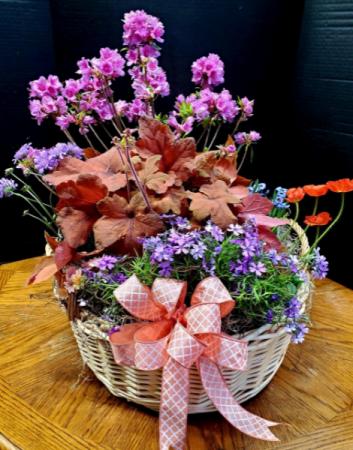 Perennial Basket Mixed Perennials