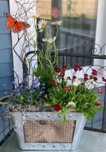 Perennial Basket Plants