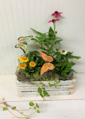 Perennial Crate