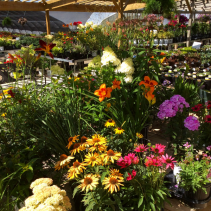 Perennials 1000's to choose from!