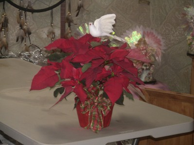 Perfect Present Poinsettia  Perfectly decorated poinsettia will light up anyone's eyes!  Hand wrapped foil pot with plaid bow & white dove.  $40.00 for a double stemmed!