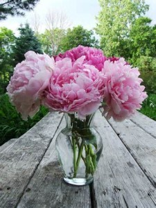 Perfectly Pink Peonies In Vase