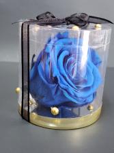 Perserved blue rose  Perserved rose