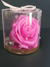 Perserved pink rose  Perserved rose