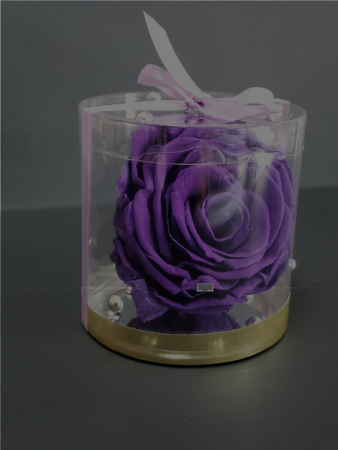 Perserved purple rose  Perserved roses