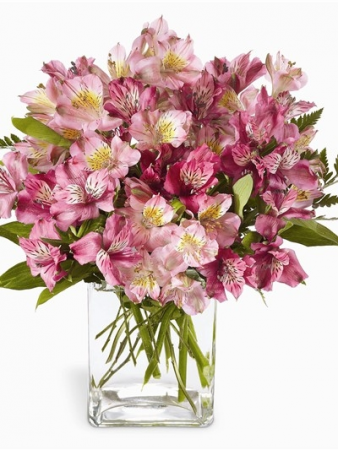Peruvian Love Vibrant stems of Peruvian Lilies