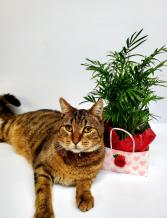PET FRIENDLY PALM PLANT PLANT