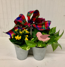 Petal Perfect Plants in Keepsake Tin